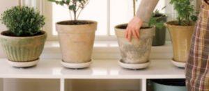 Angka 6 feng shui pot keramik